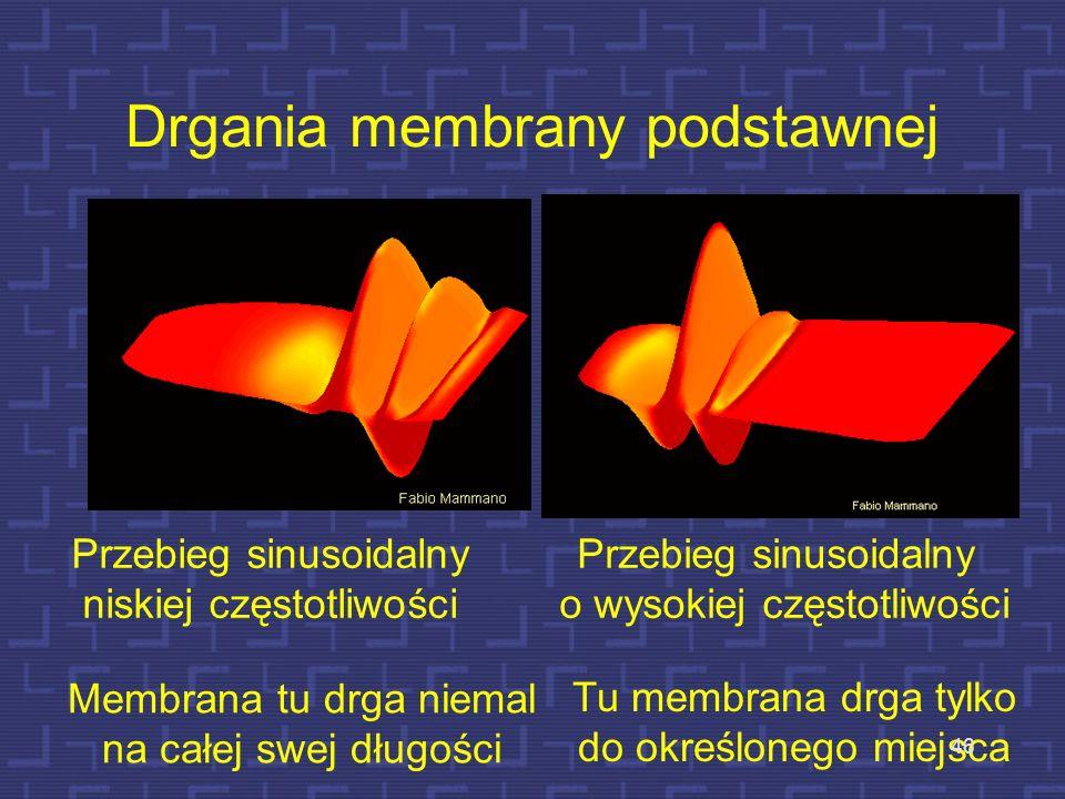 Drgania membrany podstawnej