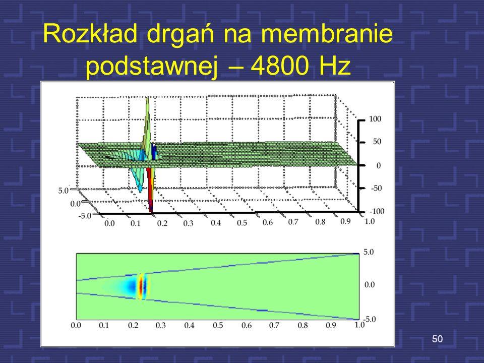 Rozkład drgań na membranie podstawnej – 4800 Hz