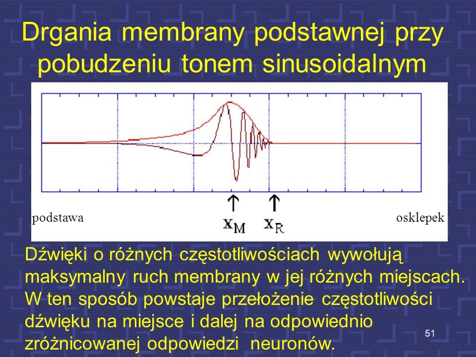 Drgania membrany podstawnej przy pobudzeniu tonem sinusoidalnym