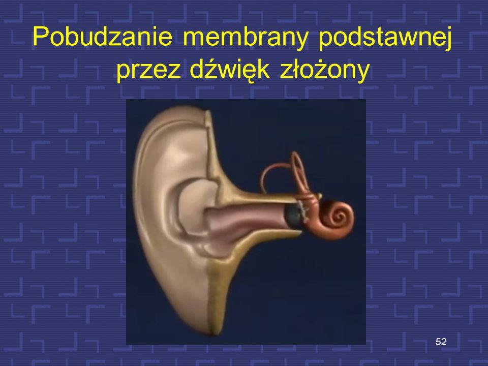 Pobudzanie membrany podstawnej przez dźwięk złożony