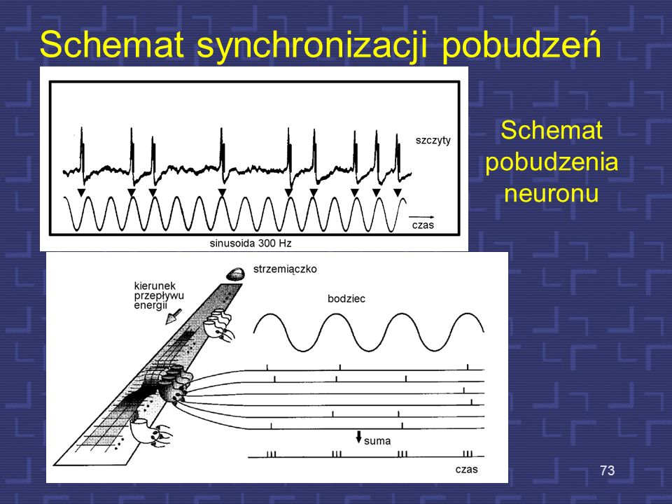 Schemat synchronizacji pobudzeń