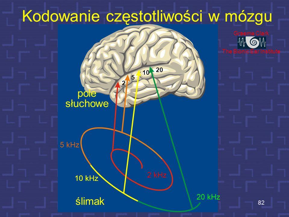 Kodowanie częstotliwości w mózgu
