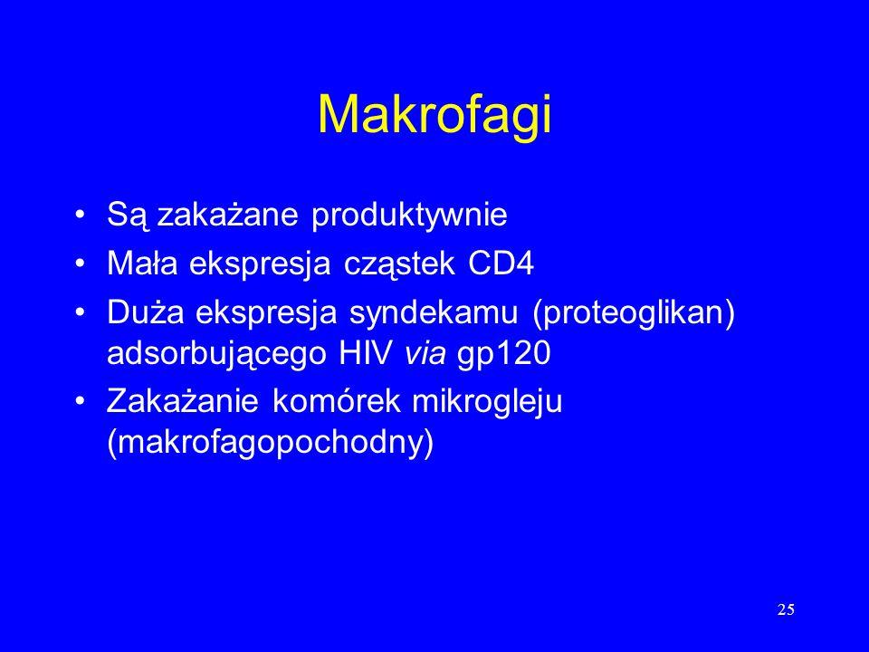 Makrofagi Są zakażane produktywnie Mała ekspresja cząstek CD4