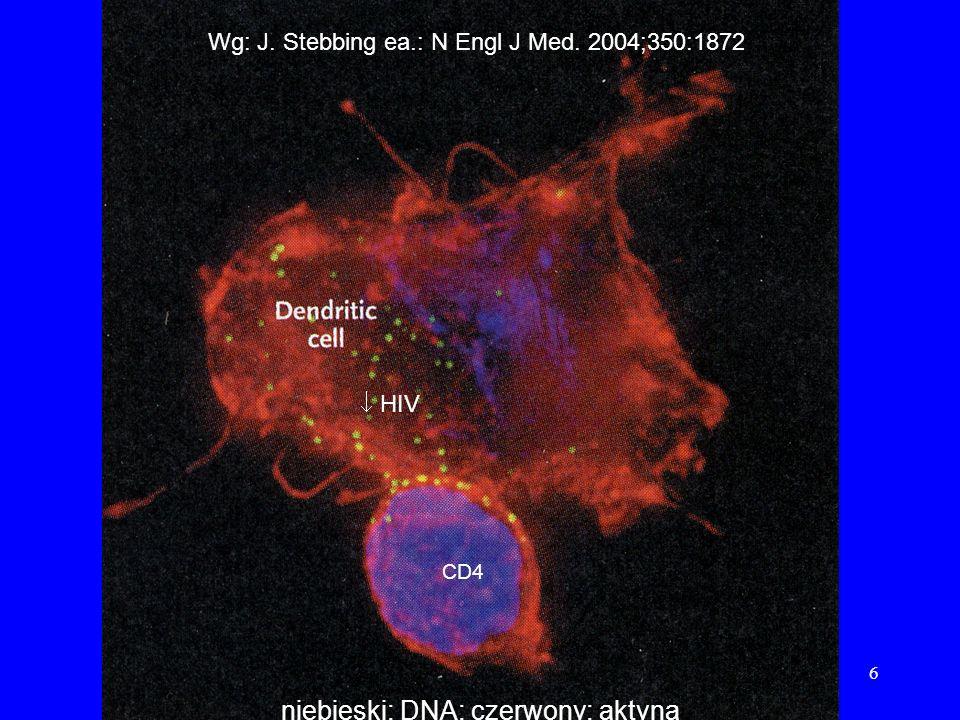 niebieski: DNA; czerwony: aktyna
