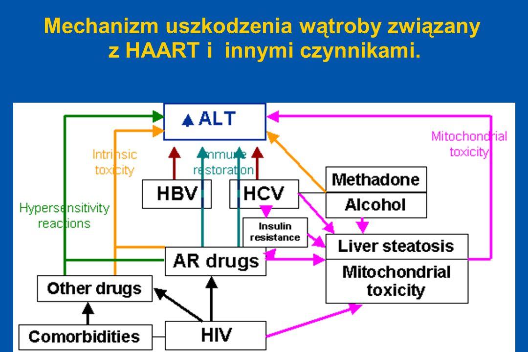 Mechanizm uszkodzenia wątroby związany z HAART i innymi czynnikami.
