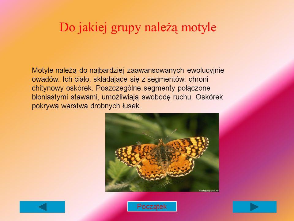 Do jakiej grupy należą motyle