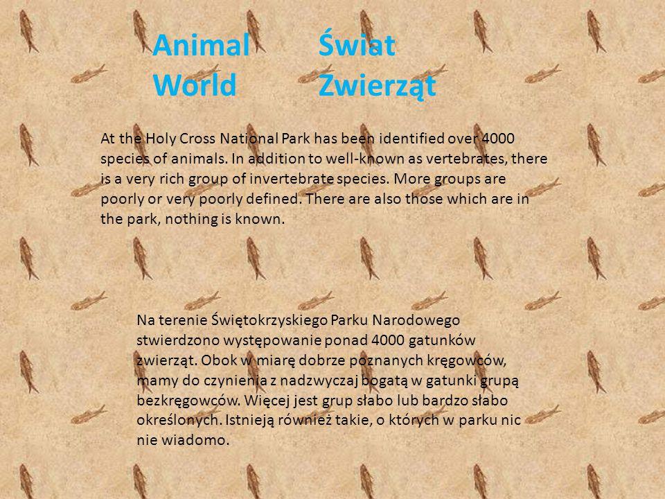 Animal World Świat Zwierząt