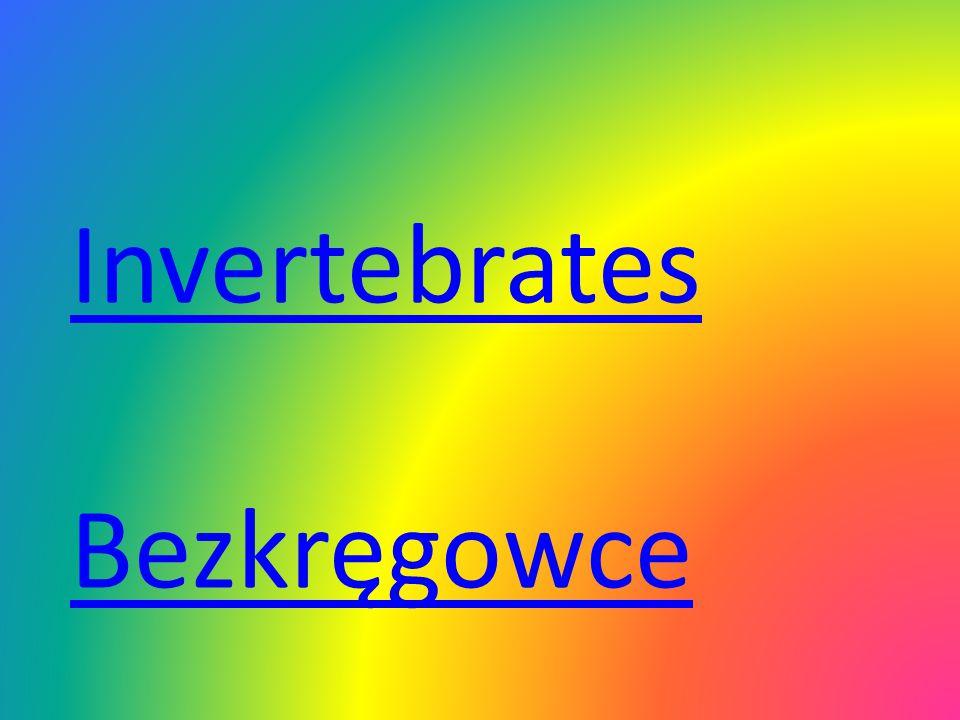 Invertebrates Bezkręgowce