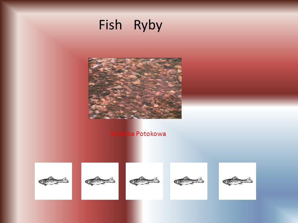 Fish Ryby Strzelba Potokowa
