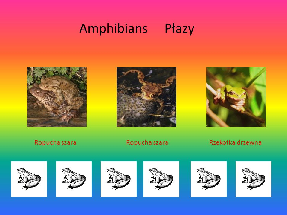 Amphibians Płazy Ropucha szara Ropucha szara Rzekotka drzewna