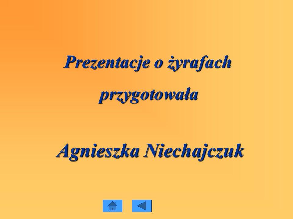 Agnieszka Niechajczuk