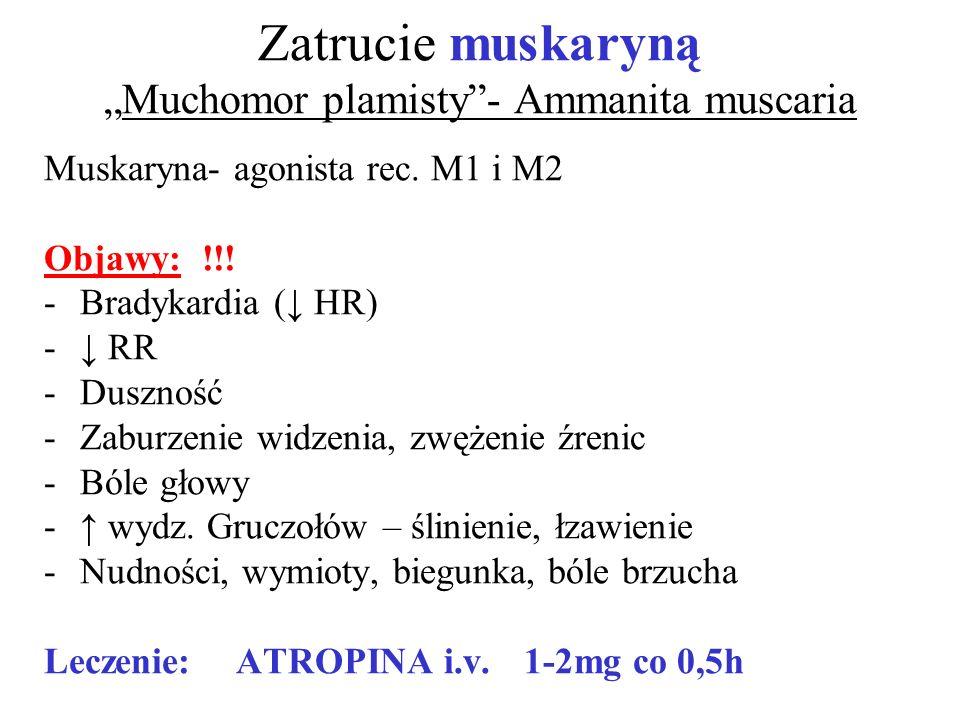 "Zatrucie muskaryną ""Muchomor plamisty - Ammanita muscaria"