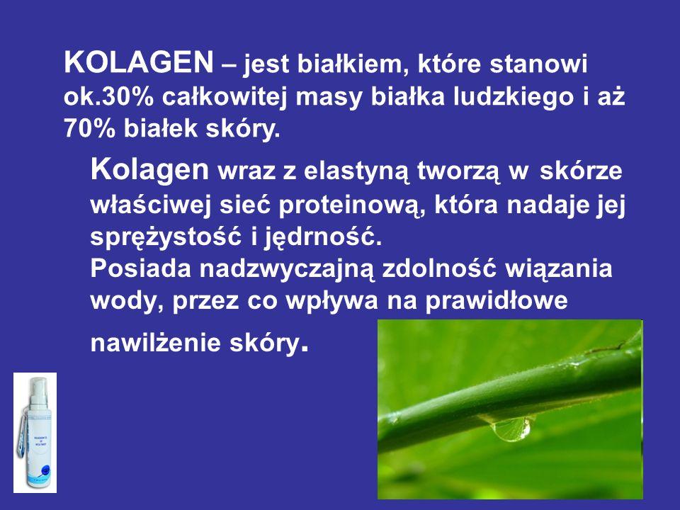 KOLAGEN – jest białkiem, które stanowi ok