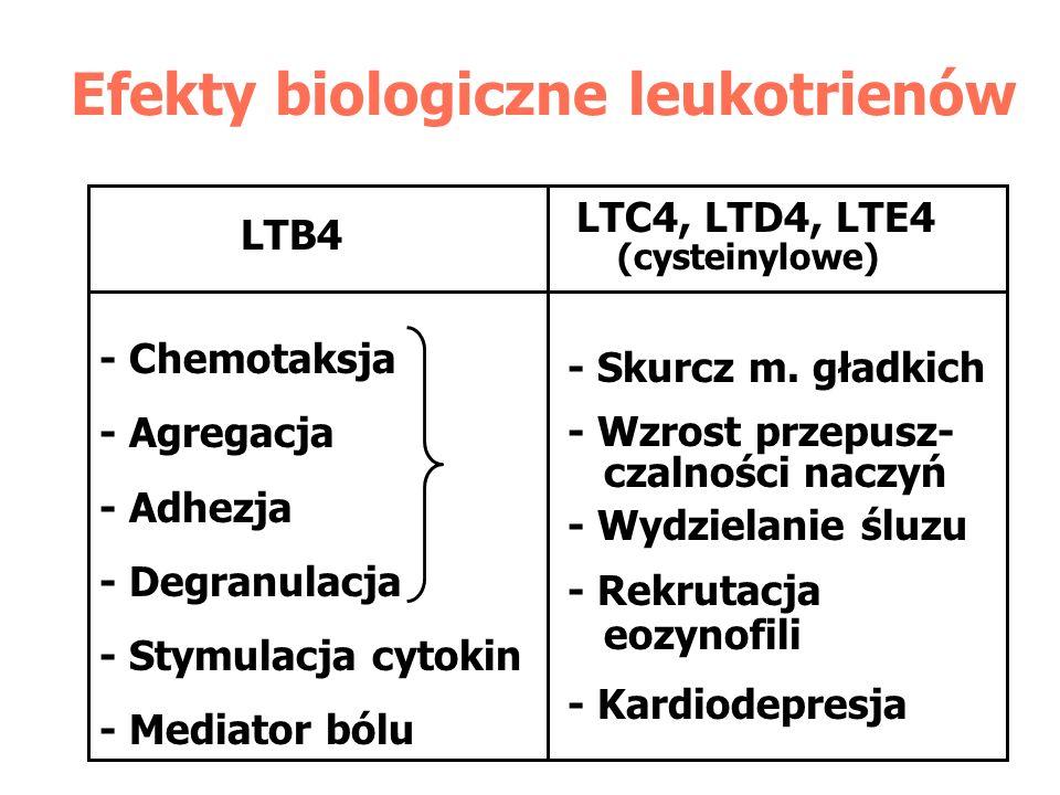 Efekty biologiczne leukotrienów