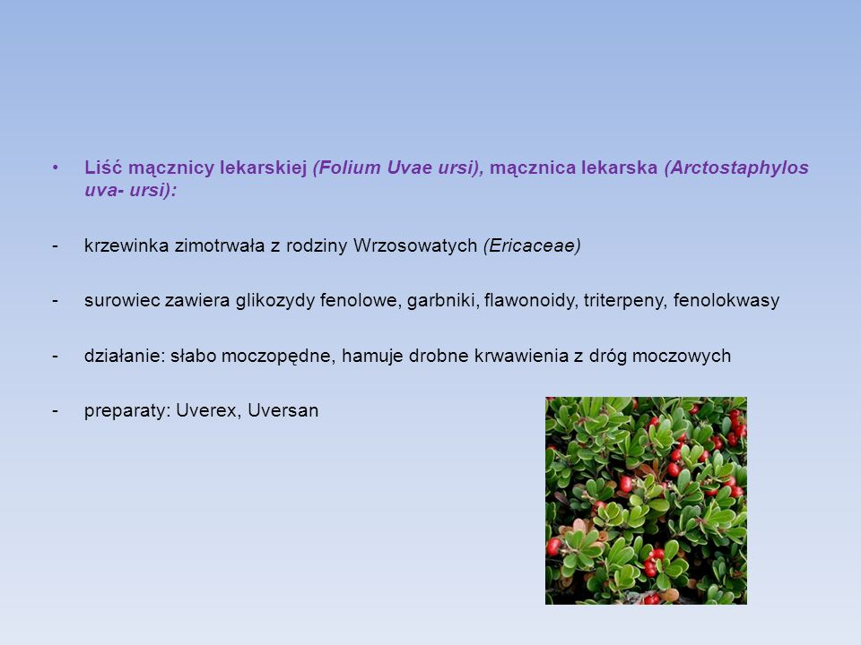 Liść mącznicy lekarskiej (Folium Uvae ursi), mącznica lekarska (Arctostaphylos uva- ursi):