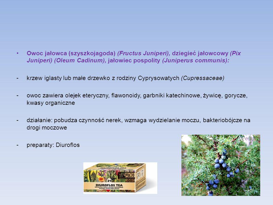Owoc jałowca (szyszkojagoda) (Fructus Juniperi), dziegieć jałowcowy (Pix Juniperi) (Oleum Cadinum), jałowiec pospolity (Juniperus communis):