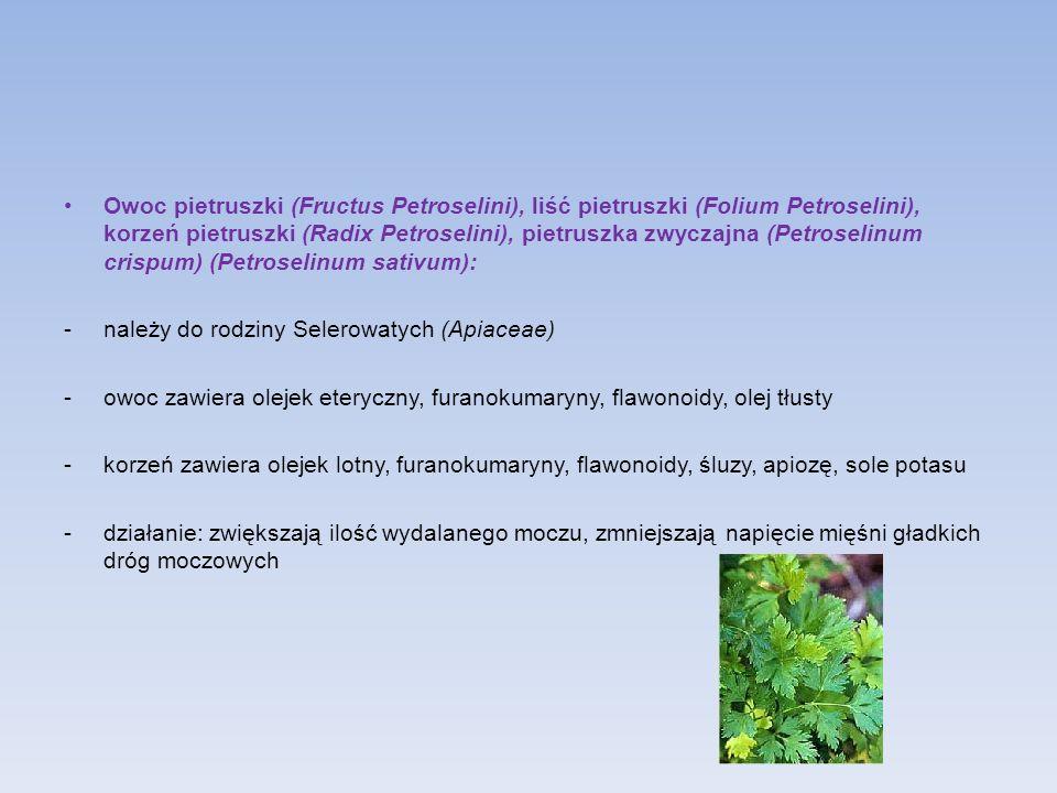 Owoc pietruszki (Fructus Petroselini), liść pietruszki (Folium Petroselini), korzeń pietruszki (Radix Petroselini), pietruszka zwyczajna (Petroselinum crispum) (Petroselinum sativum):