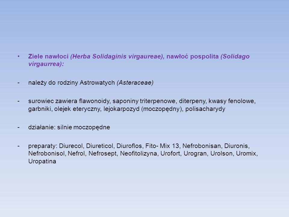 Ziele nawłoci (Herba Solidaginis virgaureae), nawłoć pospolita (Solidago virgaurrea):