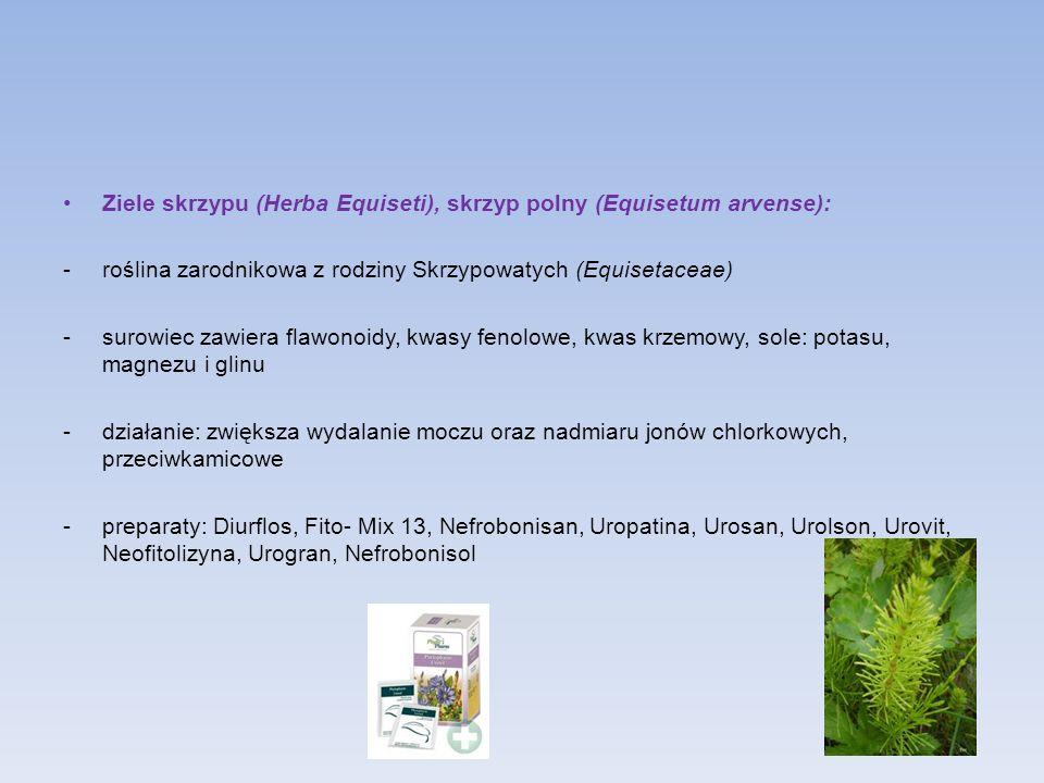 Ziele skrzypu (Herba Equiseti), skrzyp polny (Equisetum arvense):