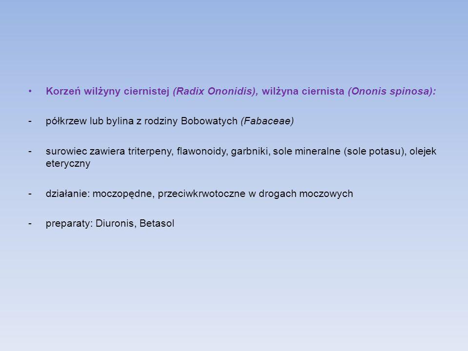 Korzeń wilżyny ciernistej (Radix Ononidis), wilżyna ciernista (Ononis spinosa):