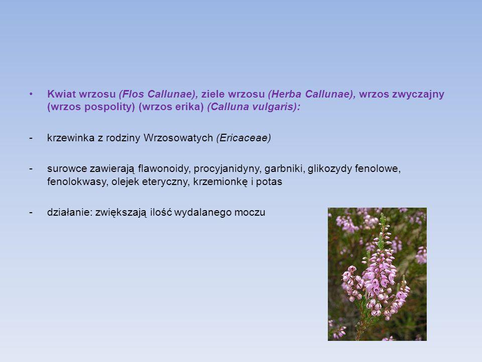 Kwiat wrzosu (Flos Callunae), ziele wrzosu (Herba Callunae), wrzos zwyczajny (wrzos pospolity) (wrzos erika) (Calluna vulgaris):