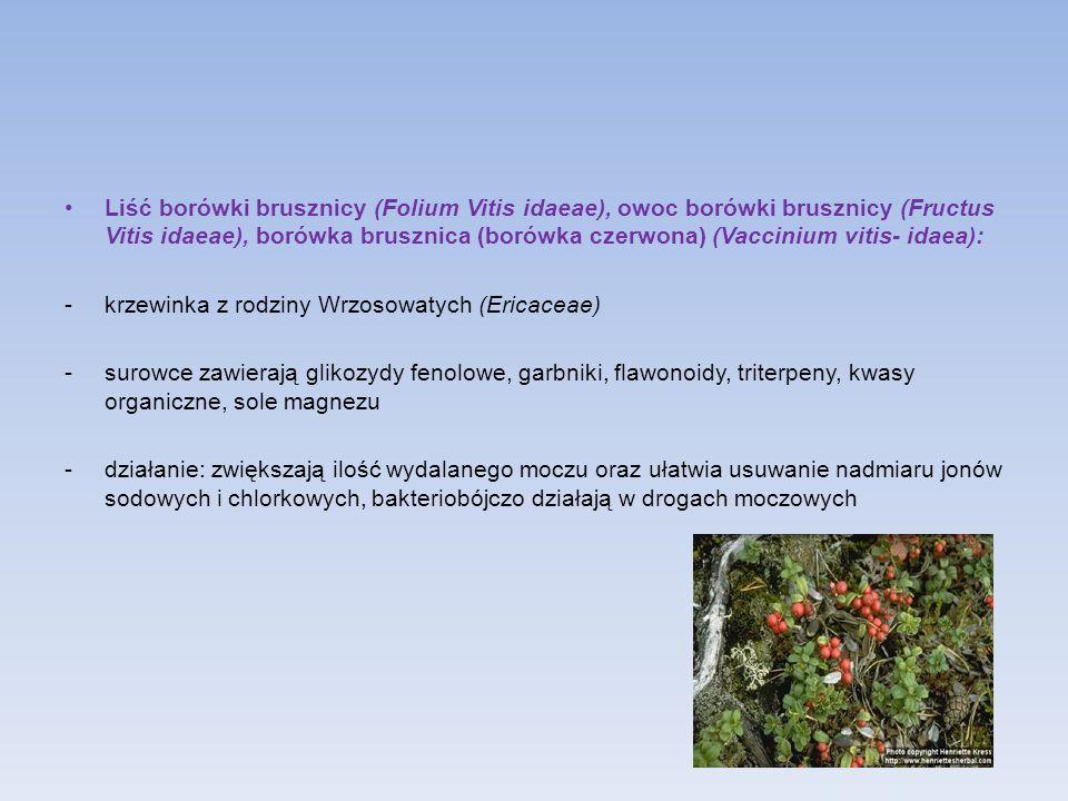 Liść borówki brusznicy (Folium Vitis idaeae), owoc borówki brusznicy (Fructus Vitis idaeae), borówka brusznica (borówka czerwona) (Vaccinium vitis- idaea):