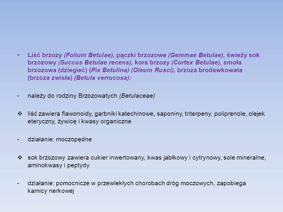 Liść brzozy (Folium Betulae), pączki brzozowe (Gemmae Betulae), świeży sok brzozowy (Succus Betulae recens), kora brzozy (Cortex Betulae), smoła brzozowa (dziegieć) (Pix Betulina) (Oleum Rusci), brzoza brodawkowata (brzoza zwisła) (Betula verrucosa):