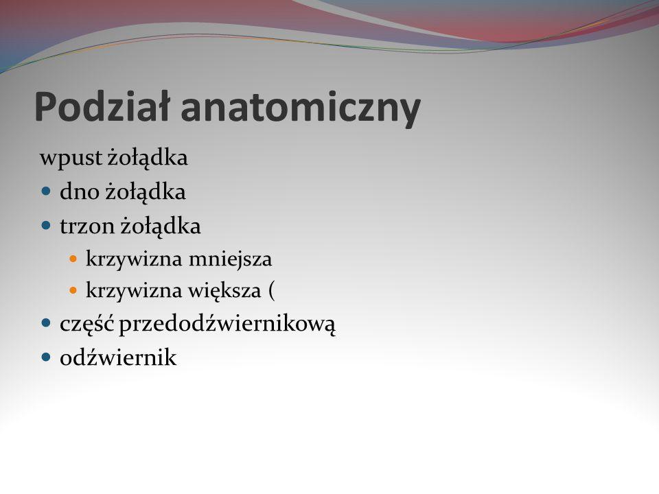 Podział anatomiczny wpust żołądka dno żołądka trzon żołądka