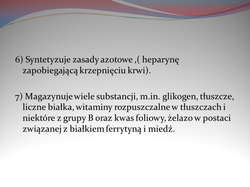 6) Syntetyzuje zasady azotowe ,( heparynę zapobiegającą krzepnięciu krwi).