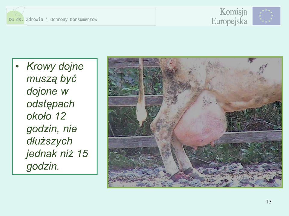 Krowy dojne muszą być dojone w odstępach około 12 godzin, nie dłuższych jednak niż 15 godzin.
