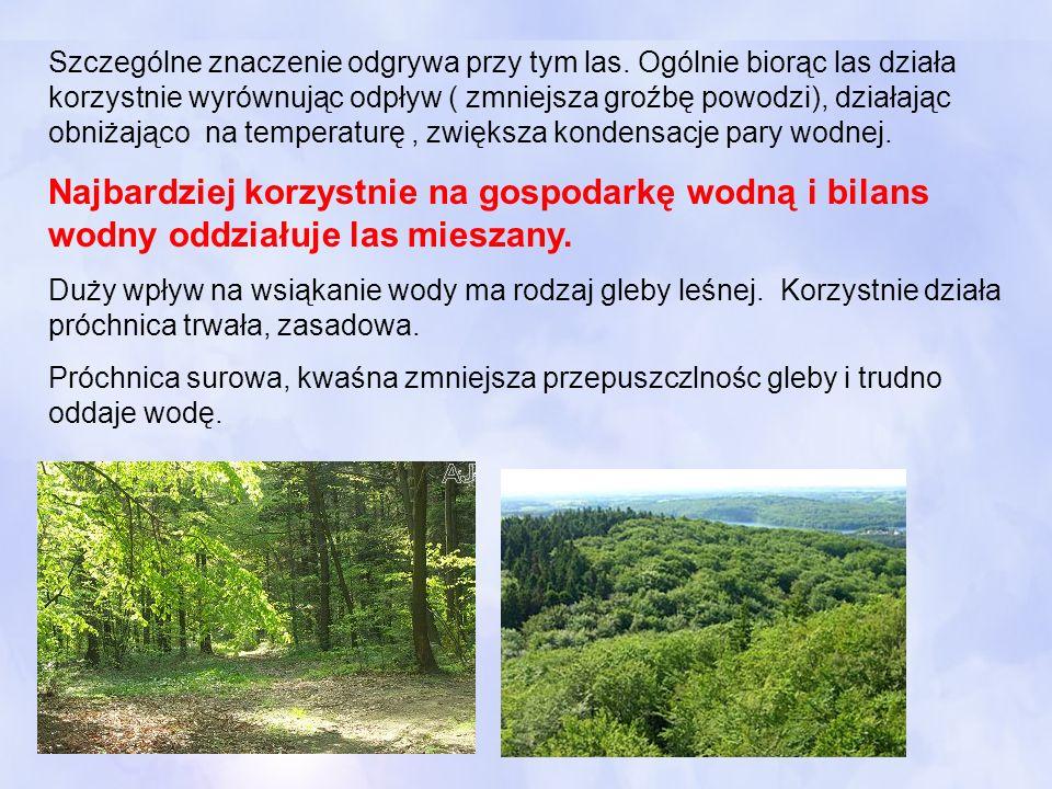 Szczególne znaczenie odgrywa przy tym las