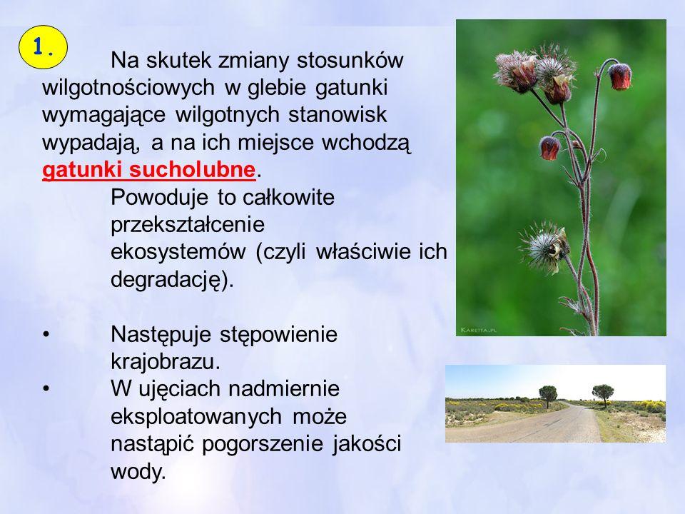 Na skutek zmiany stosunków wilgotnościowych w glebie gatunki wymagające wilgotnych stanowisk wypadają, a na ich miejsce wchodzą gatunki sucholubne.