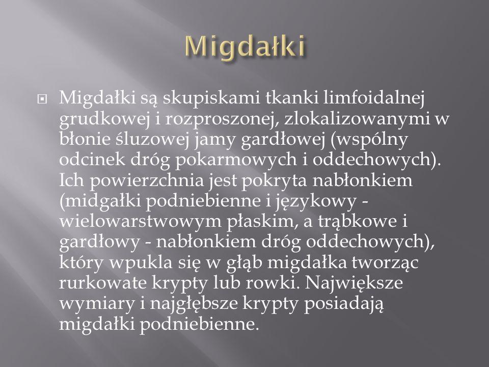 Migdałki