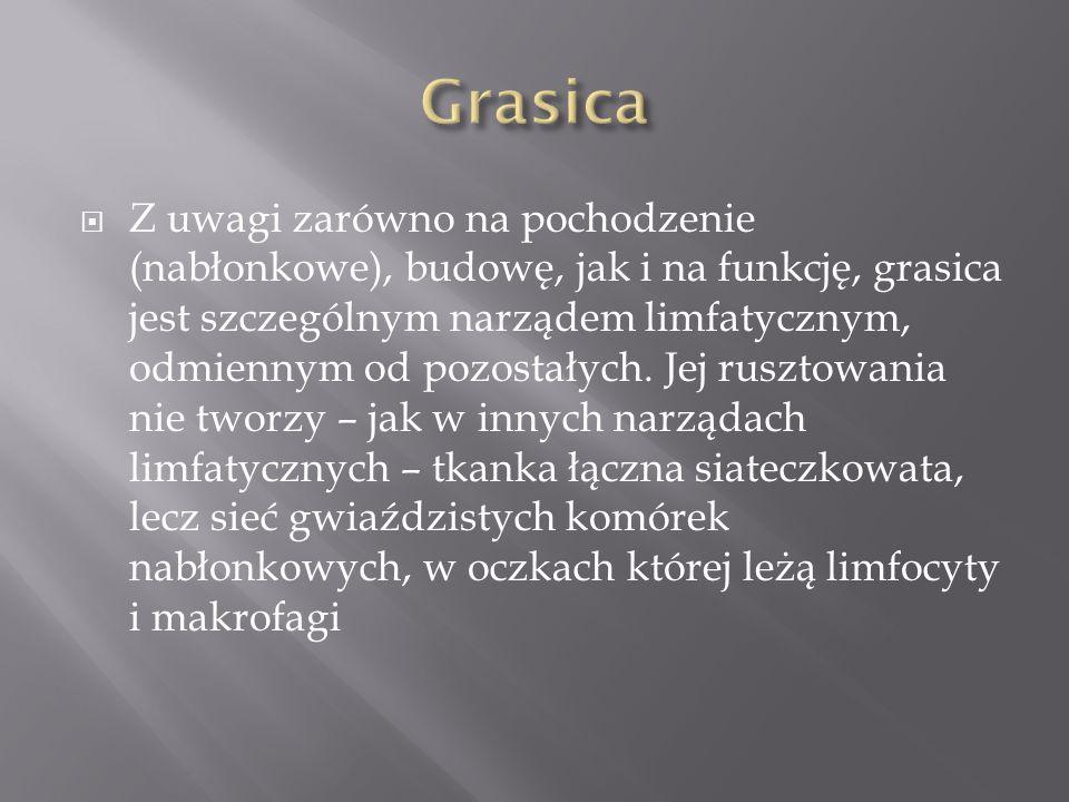 Grasica