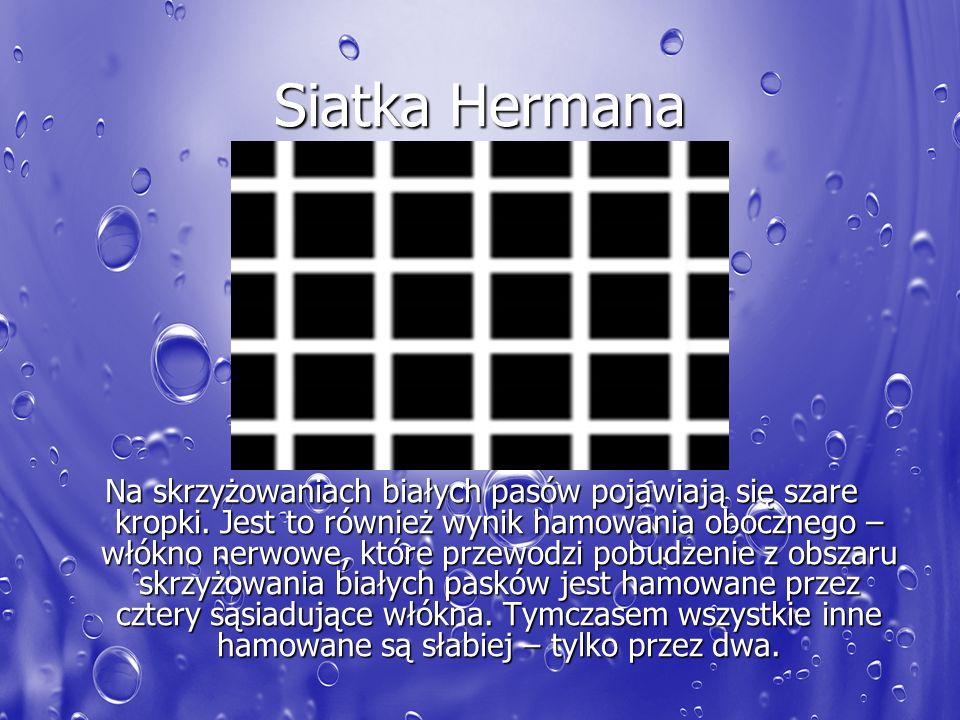 Siatka Hermana