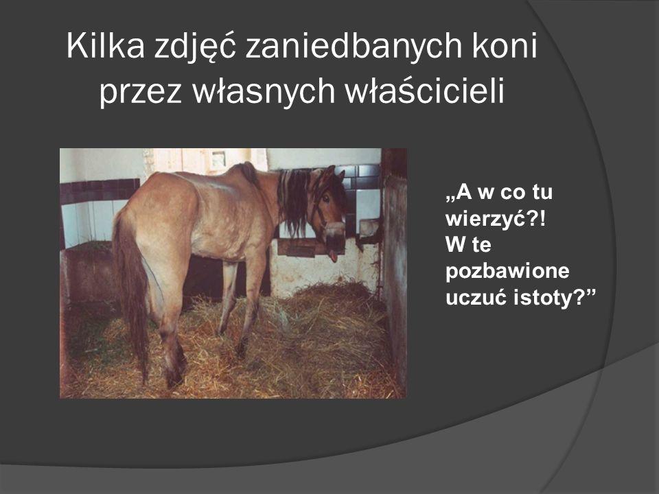 Kilka zdjęć zaniedbanych koni przez własnych właścicieli