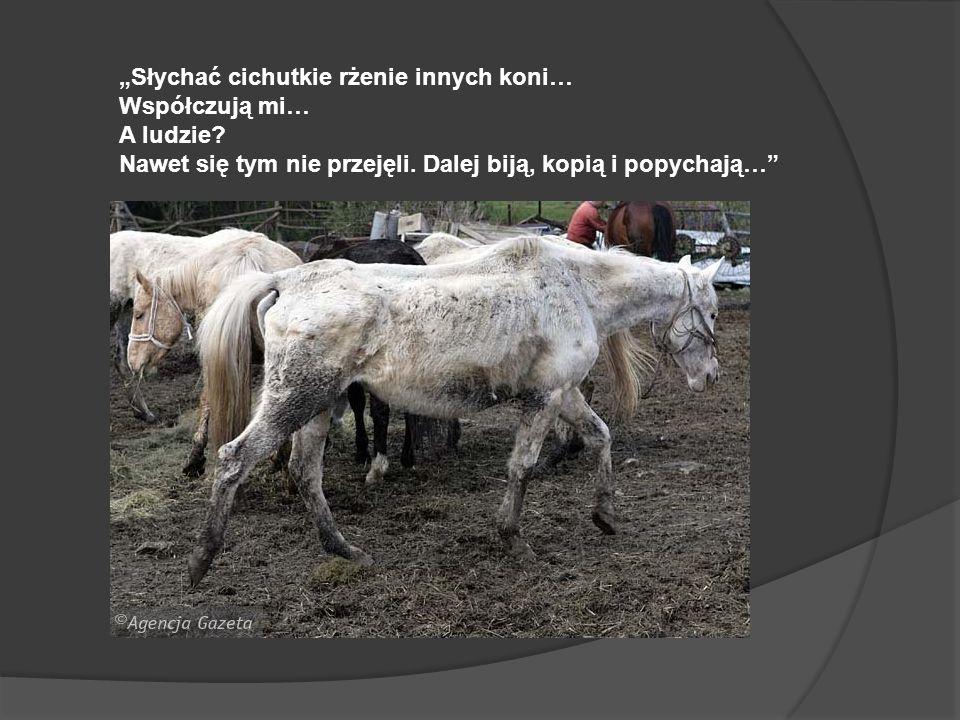 """""""Słychać cichutkie rżenie innych koni…"""