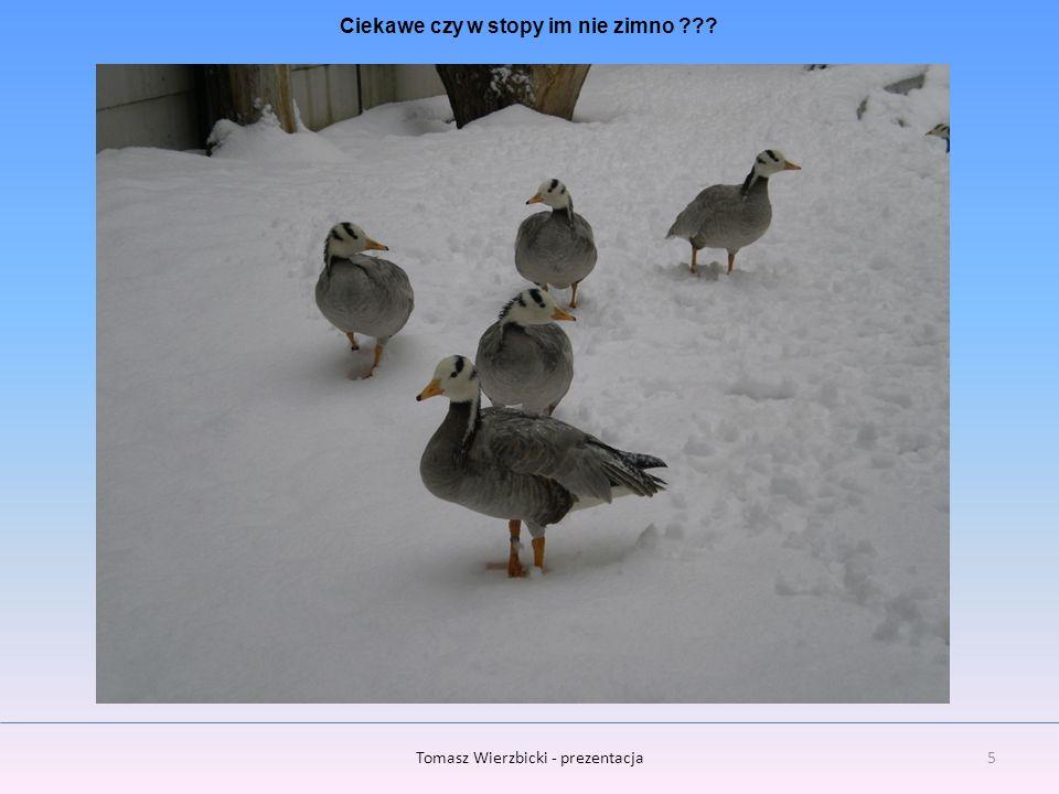 Ciekawe czy w stopy im nie zimno