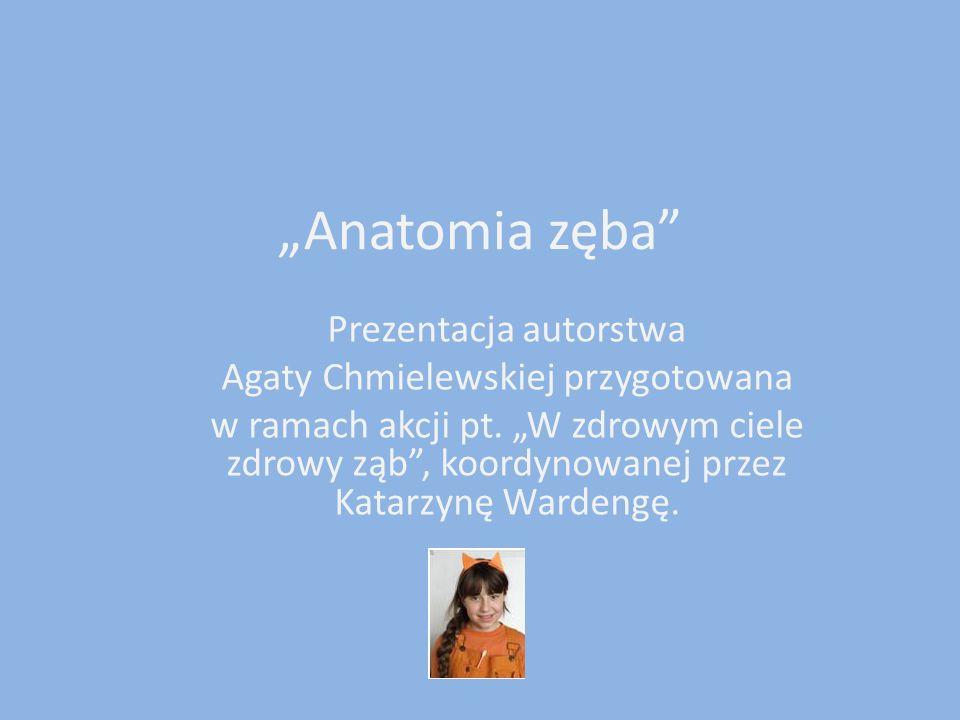 """""""Anatomia zęba Prezentacja autorstwa Agaty Chmielewskiej przygotowana"""