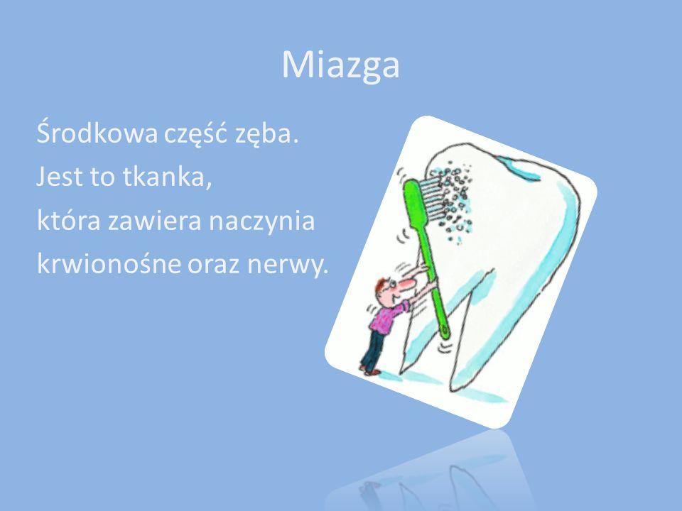 Miazga Środkowa część zęba. Jest to tkanka, która zawiera naczynia krwionośne oraz nerwy.
