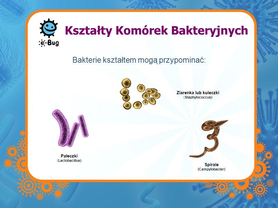 Kształty Komórek Bakteryjnych