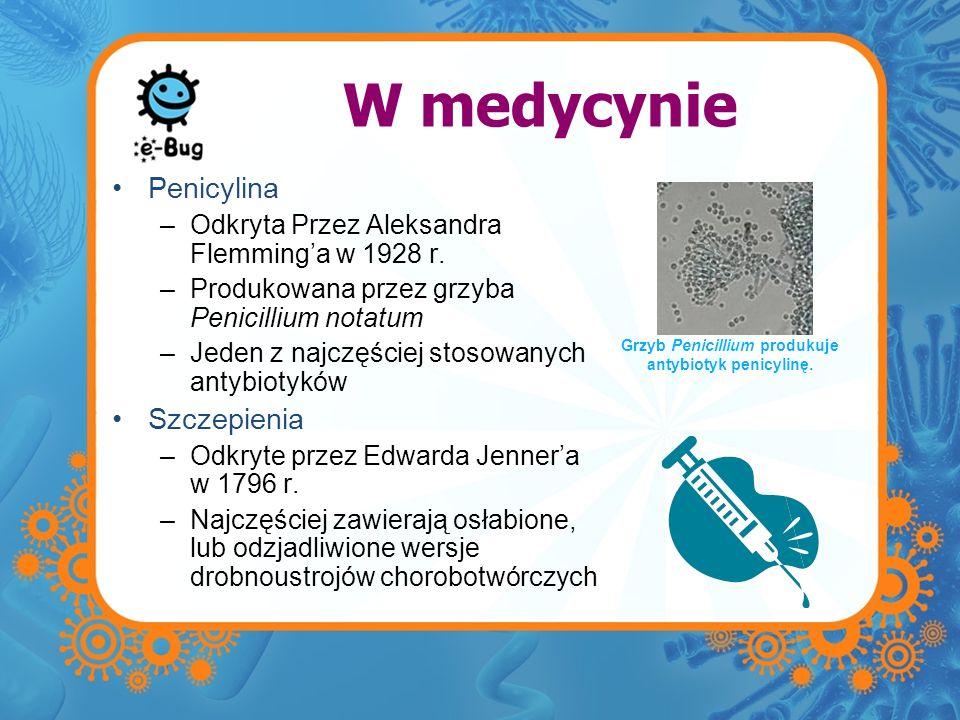 Grzyb Penicillium produkuje antybiotyk penicylinę.