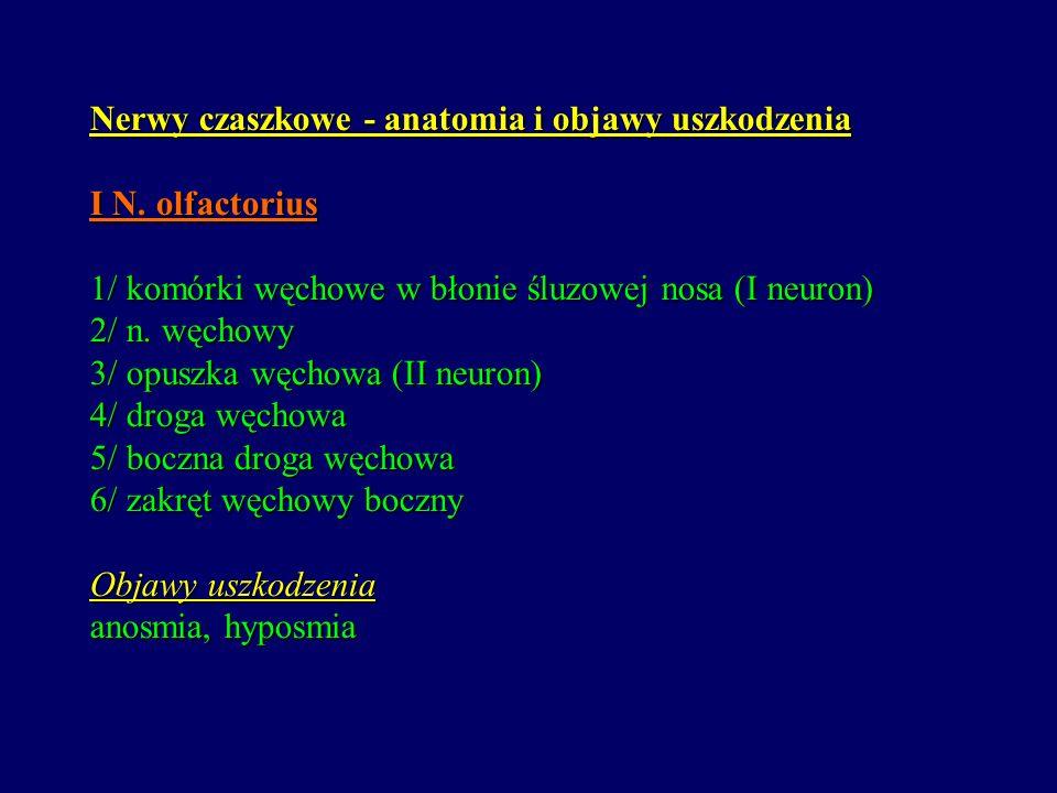 Nerwy czaszkowe - anatomia i objawy uszkodzenia I N. olfactorius