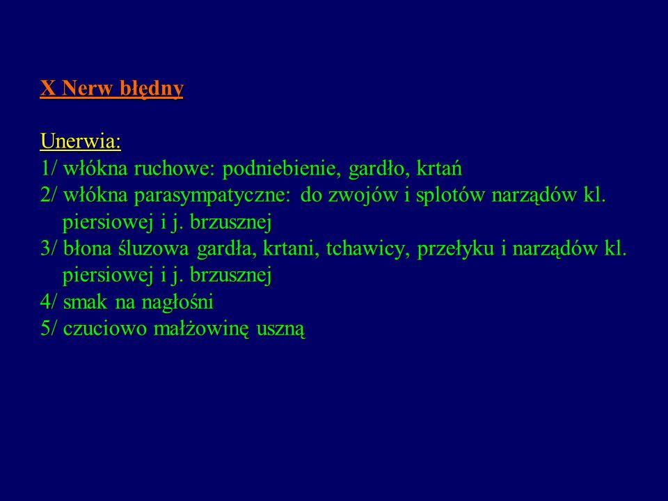 X Nerw błędny Unerwia: 1/ włókna ruchowe: podniebienie, gardło, krtań 2/ włókna parasympatyczne: do zwojów i splotów narządów kl.