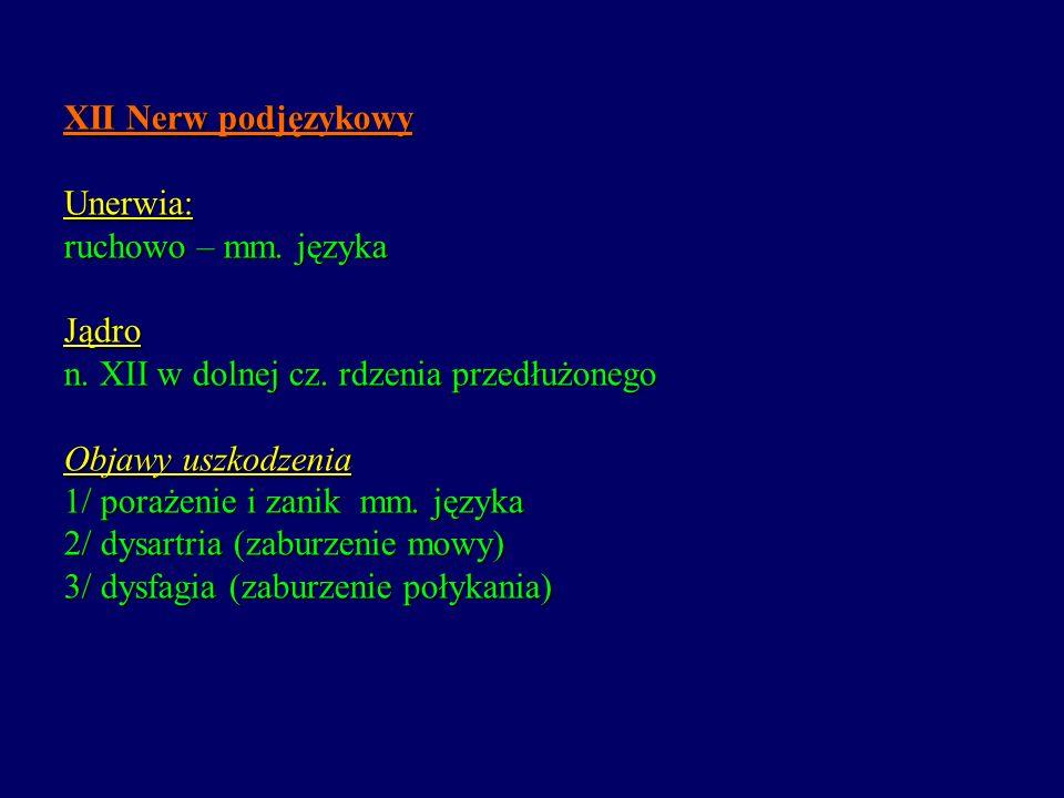 XII Nerw podjęzykowy Unerwia: ruchowo – mm. języka Jądro n