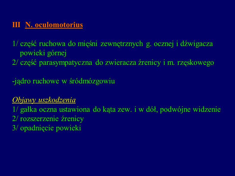 III N. oculomotorius 1/ część ruchowa do mięśni zewnętrznych g