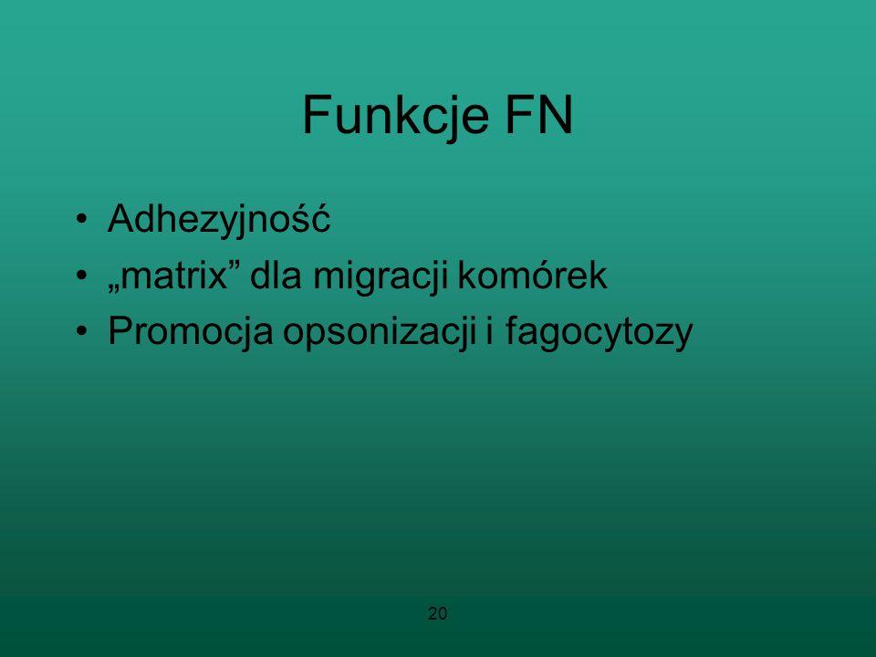 """Funkcje FN Adhezyjność """"matrix dla migracji komórek"""