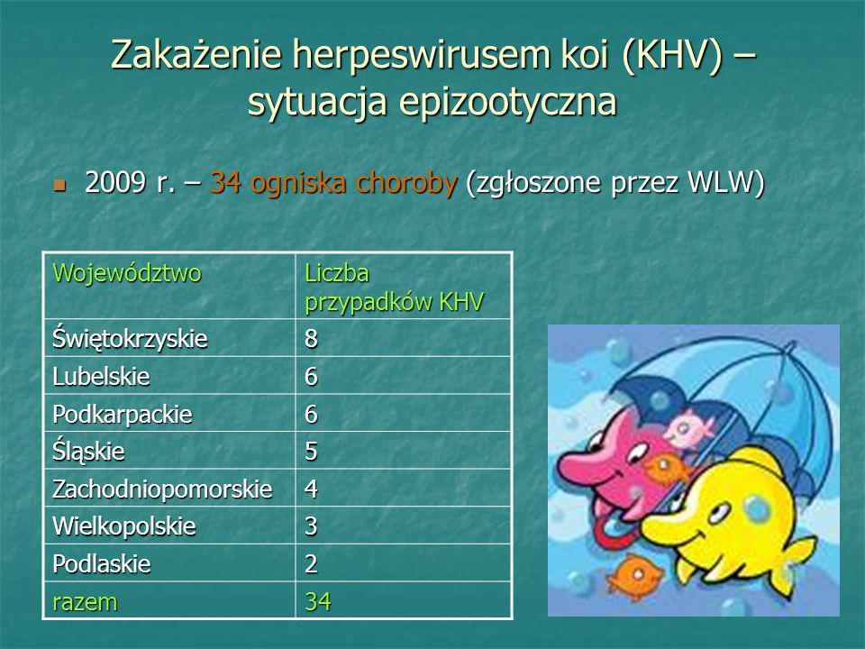 Zakażenie herpeswirusem koi (KHV) – sytuacja epizootyczna