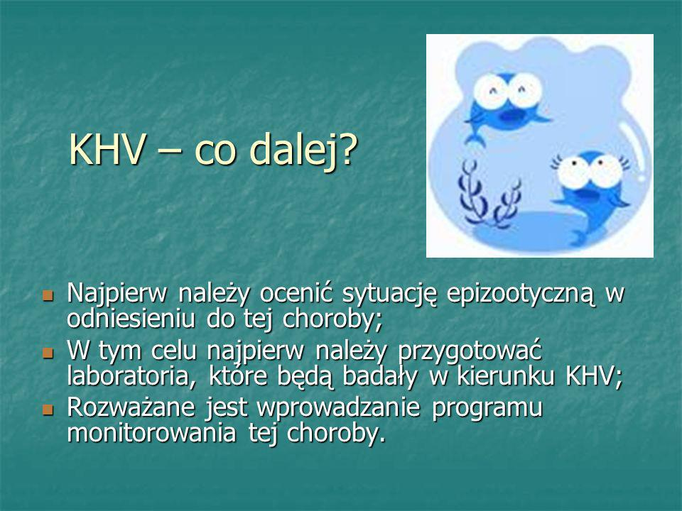 KHV – co dalej Najpierw należy ocenić sytuację epizootyczną w odniesieniu do tej choroby;