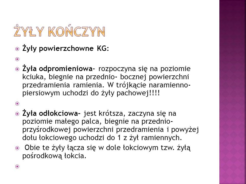 ŻYŁY KOŃCZYN Żyły powierzchowne KG: